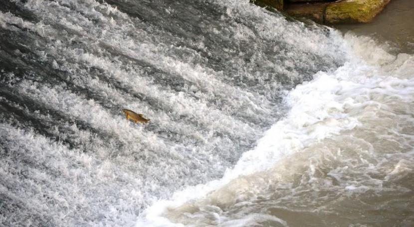 Ver la imagen en tamaño real. La CHS colocará una escala para peces en el azud de los Molinos del río Segura en la ciudad de Murcia