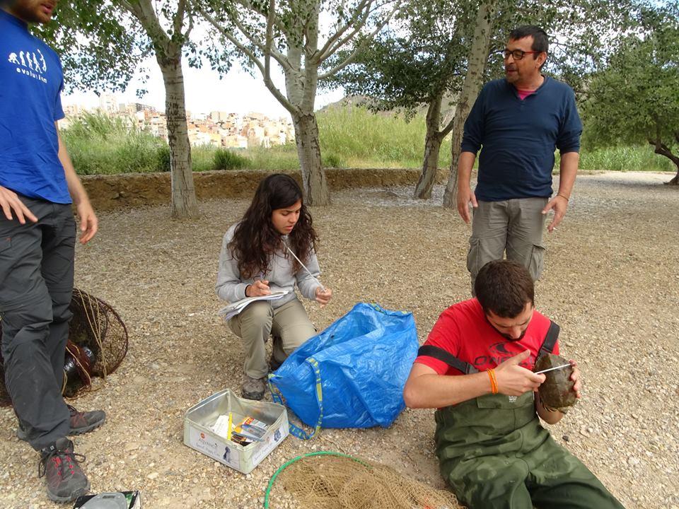 Ver la imagen en tamaño real. Reanudamos los seguimientos de galápagos en el Segura