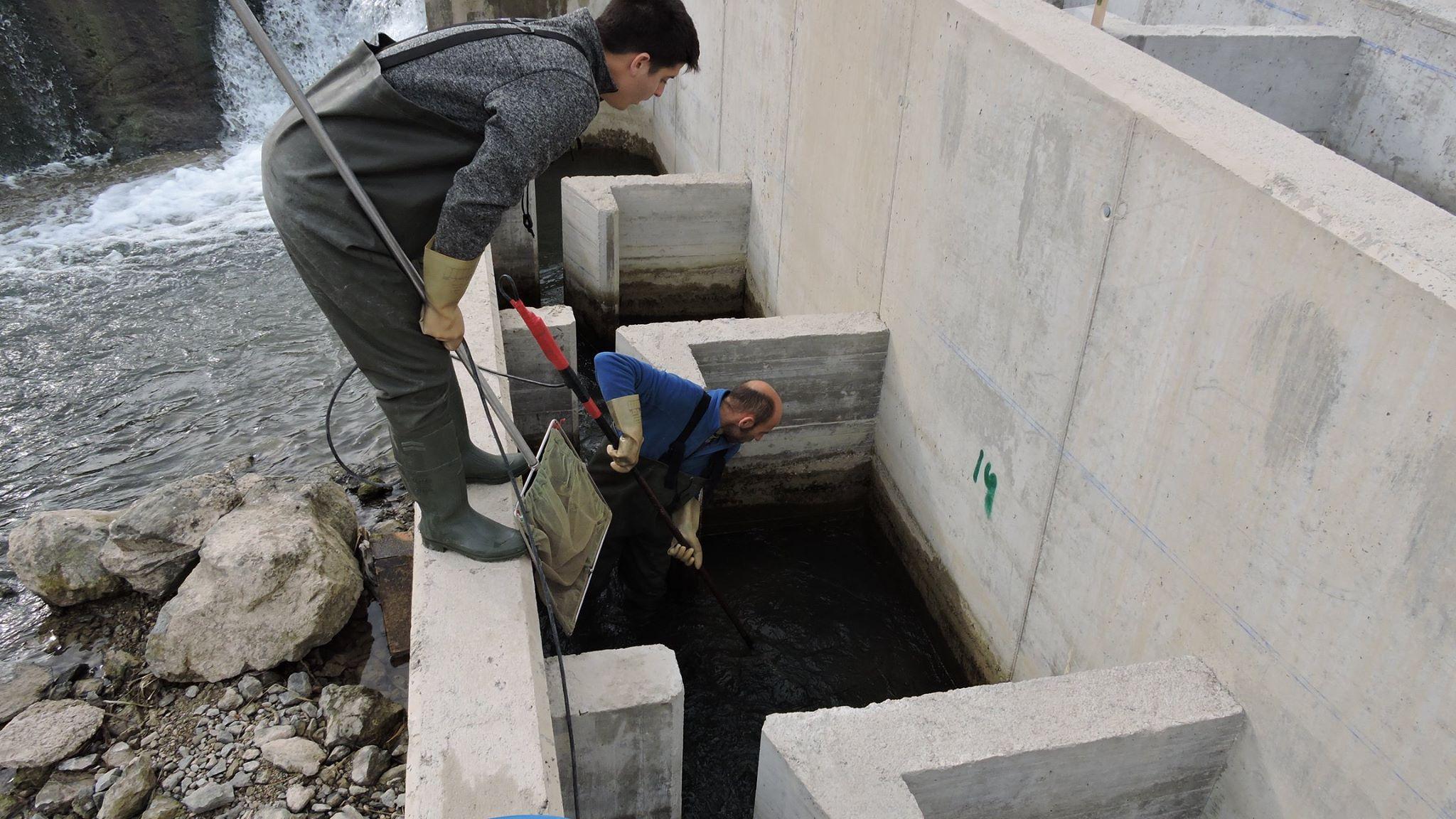 Ver la imagen en tamaño real. Campaña de pesca en los pasos de peces construidos por el proyecto LIFE+SEGURARIVERLINK