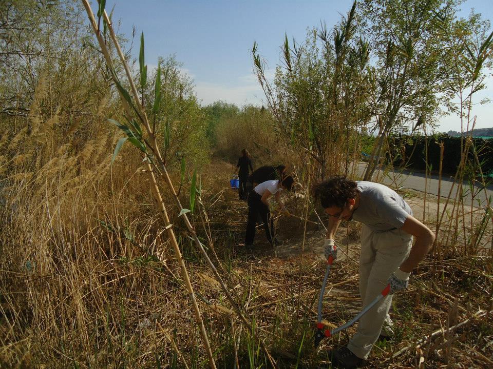 Ver la imagen en tamaño real. Voluntarios del LIFE +SEGURA RIVERLINK realizan tareas de mantenimiento en restauraciones del río Segura