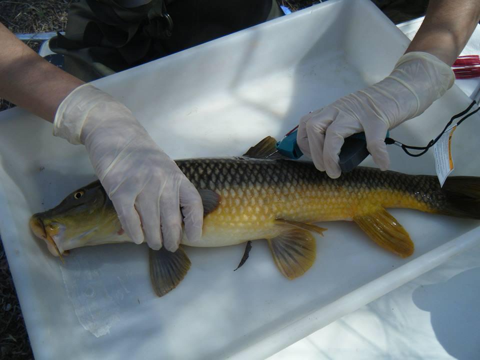 Ver la imagen en tamaño real. Los medios se hacen eco de la construcción de una escala para peces en El Jarral