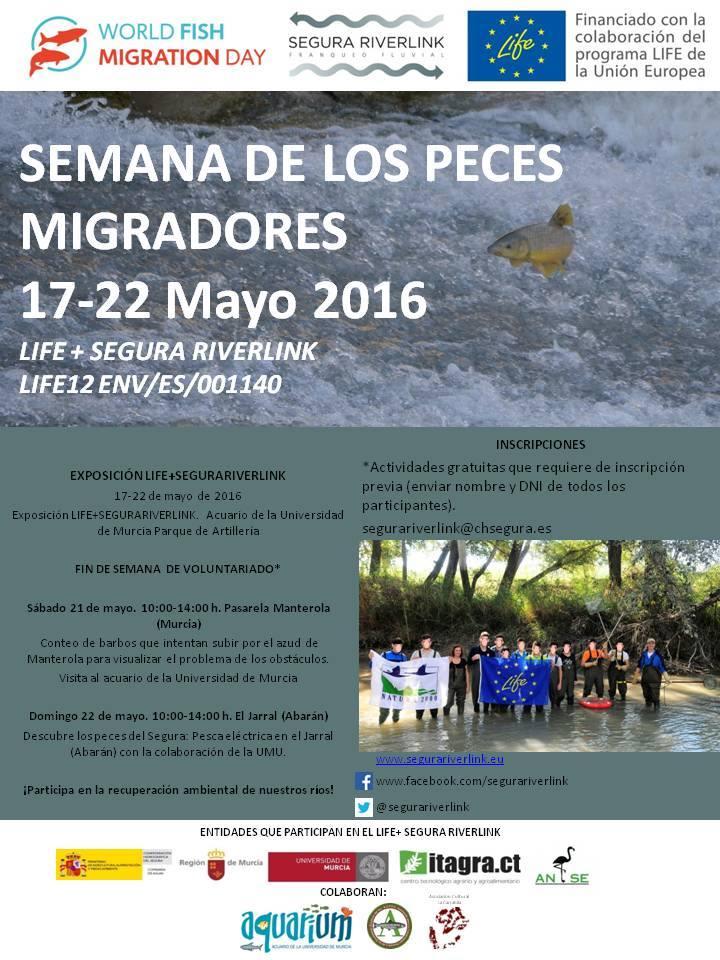 Ver la imagen en tamaño real. LIFE+SEGURARIVERLINK celebra el día de los peces migradores  con actividades de voluntariado y una exposición
