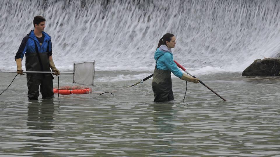 Ver la imagen en tamaño real. Los pasos para peces en pleno funcionamiento