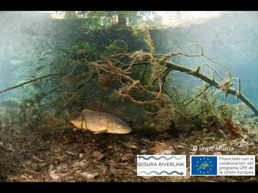 Ver la imagen en tamaño real. La Verdad publica las fotos subacuáticas obtenidas por Javier Murcia en el contexto del LIFE+SEGURARIVERLINK