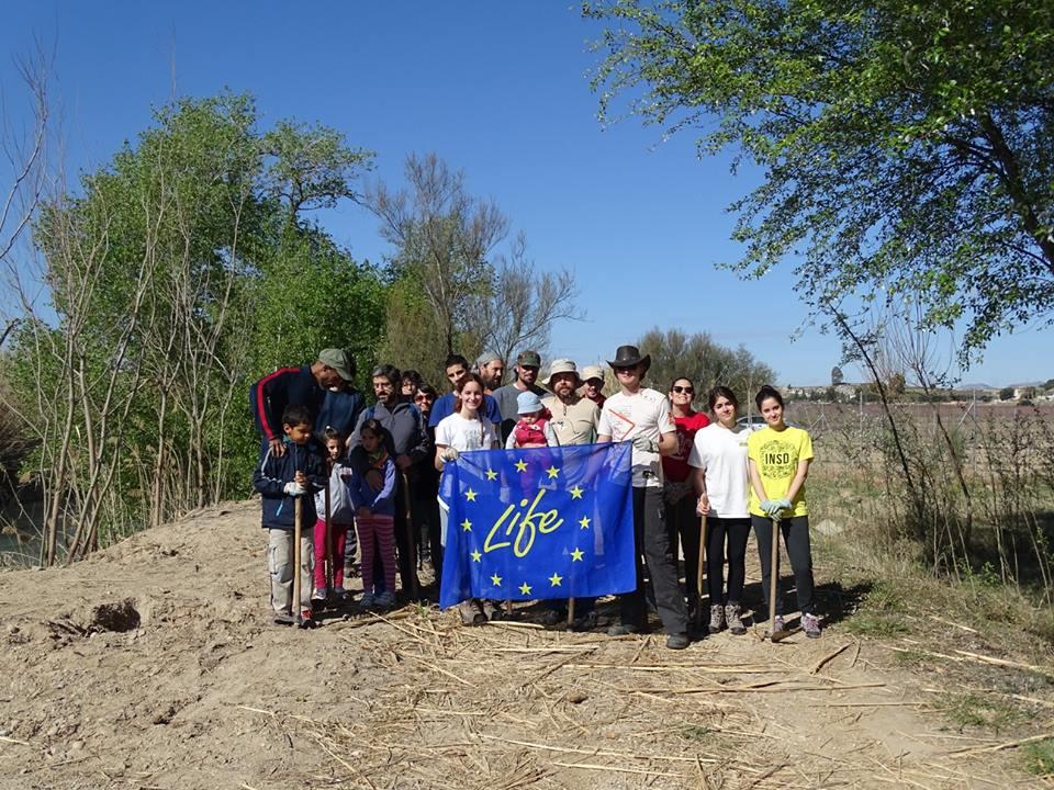 Ver la imagen en tamaño real. Ecologistas en Acción y ANSE plantan un bosque de ribera en el ámbito del voluntariado del LIFE+SEGURARIVERLINK
