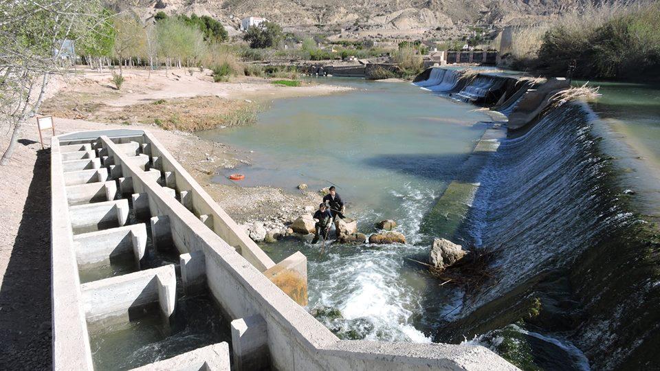 Ver la imagen en tamaño real. Ratas de agua en la escala de El Jarral