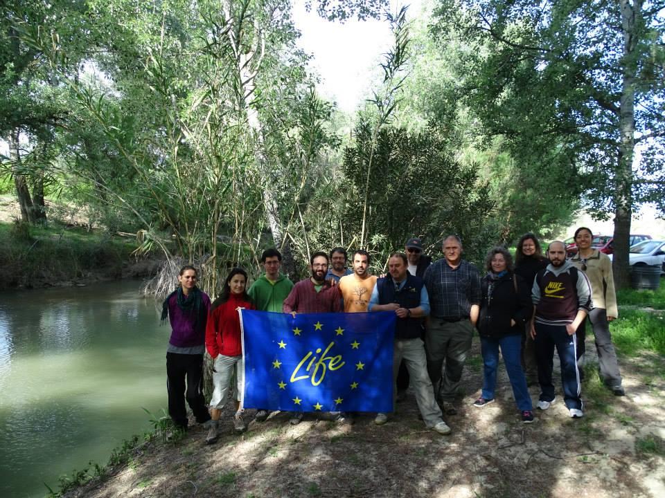 Ver la imagen en tamaño real. Voluntarios del LIFE+SEGURARIVERLINK participan en la limpieza de frezaderos de barbo de un coto de pesca