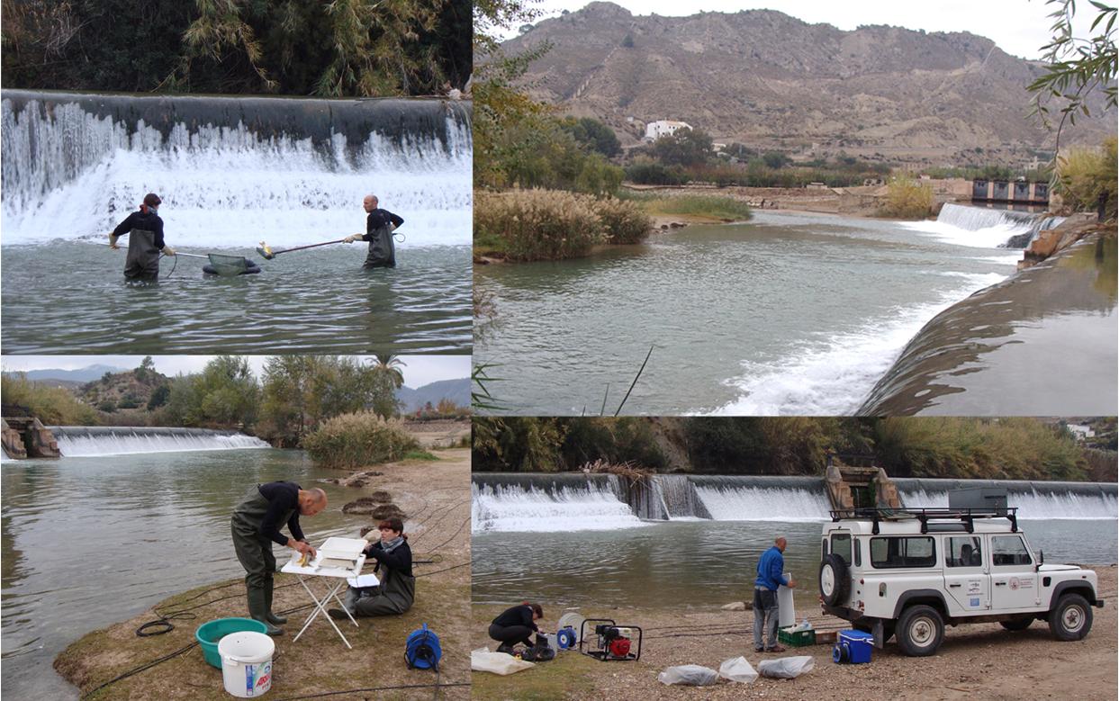 Ver la imagen en tamaño real. La Universidad de Murcia obtiene resultados preliminares sobre la evaluación inicial de las comunidades de peces y sus poblaciones.